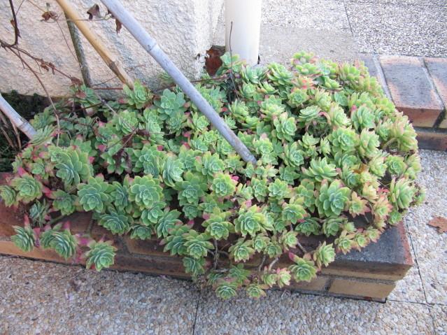 réf:1570-1  photo prise le 15-10-2011