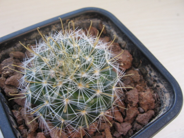 réf:317-1  photo prise le  11-11-2008