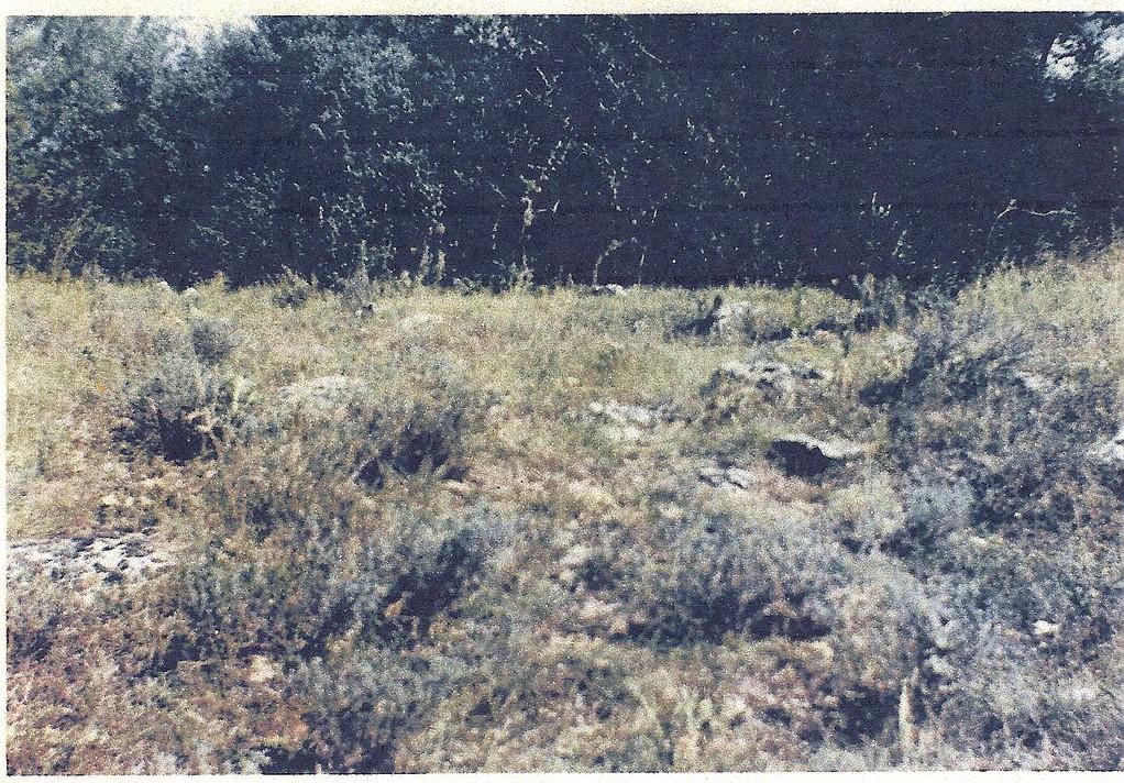 Photo année 1950.se voyait un alignement de pierres appelé Cimetière.