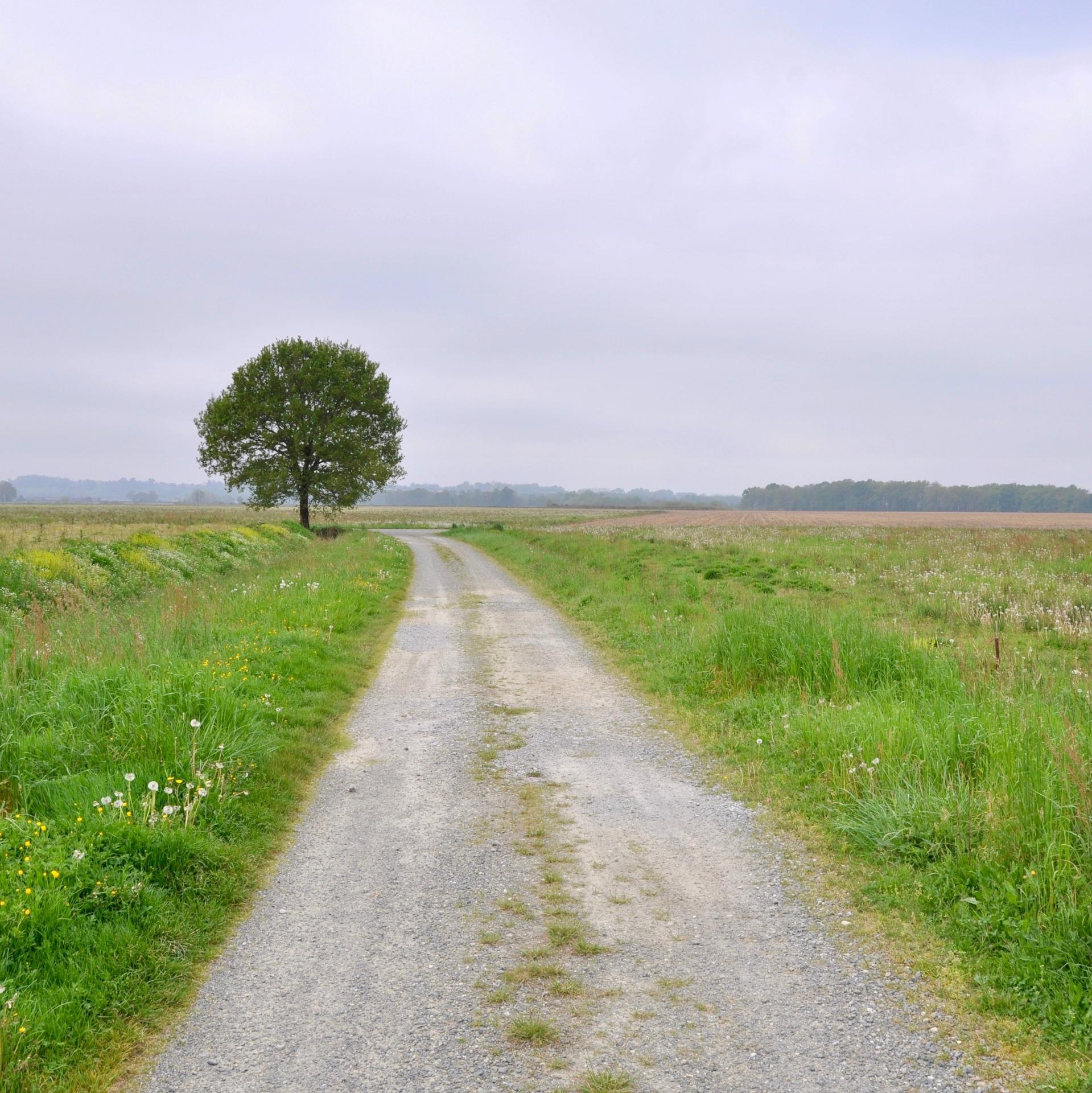 Chemin de St. Jacques vers Orthez