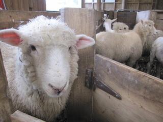 羊毛断熱材の役割