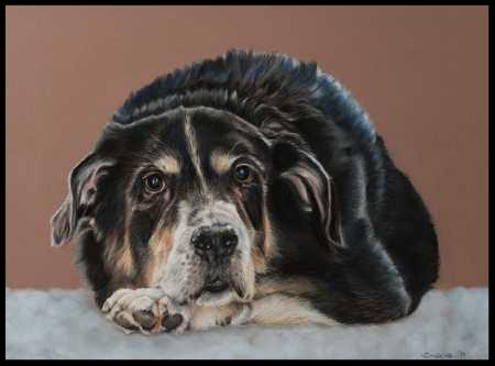 Hundezeichnung, Tierzeichnung, Hundemalerei, Tiermalerei, Mischling, Hundeportrait, Zeichnung, Pastellzeichnung