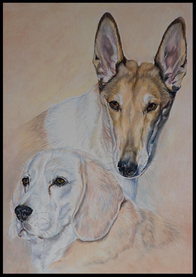 Hundezeichnung, Tierzeichnung, Hundemalerei, Tiermalerei, Collie, Beagle, Hundeportrait, Zeichnung, Pastellzeichnung
