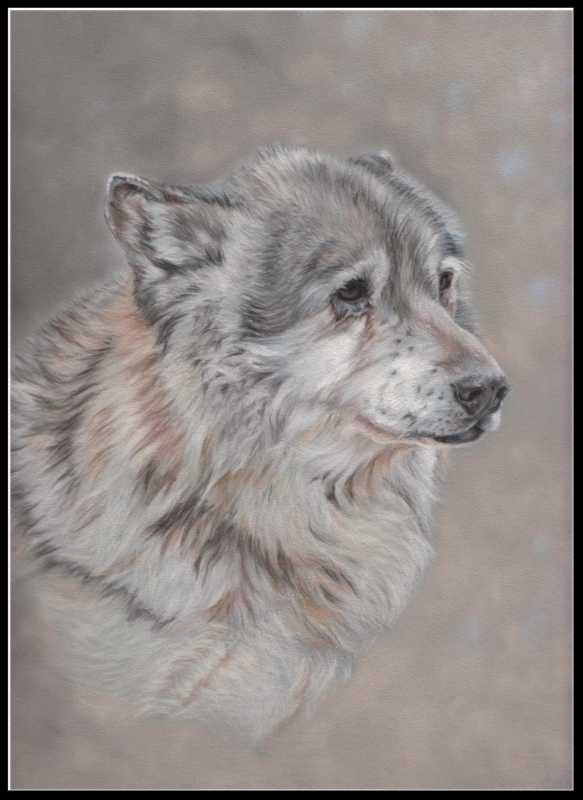 Tierzeichnung, Wolfportrait, Pastellzeichnung, Wildlife