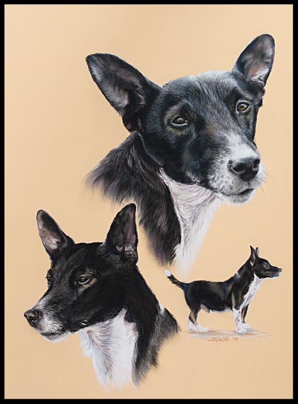 Hundezeichnung, Tierzeichnung, Hundemalerei, Tiermalerei, Jack Russel, Hundeportrait, Zeichnung, Pastellzeichnung