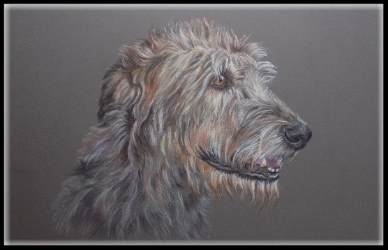 Hundezeichnung, Tierzeichnung, Hundeportrait, Zeichnung, Hund, Irischer Wolfshund, Irish Wolfhound, Tierzeichnung, Pastellzeichnung, pastel painting