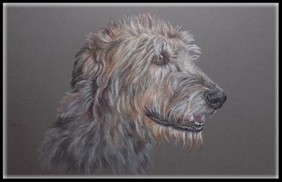 Hundezeichnung, Tierzeichnung, Hund, Irischer Wolfshund, Hundeportrait, Zeichnung, Tiermaler, Pastell