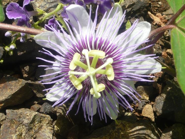 Tropischer Garten Don Genaro 13