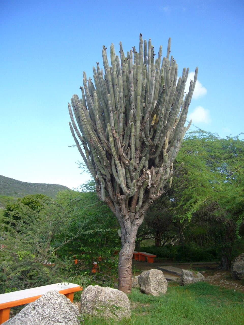 Tropischer Garten Don Genaro 19
