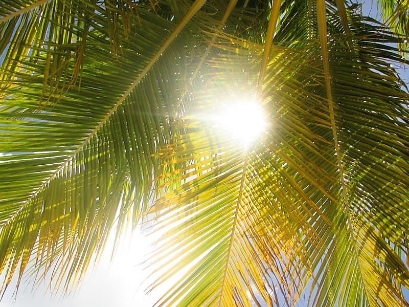 Tropischer Garten Don Genaro 18