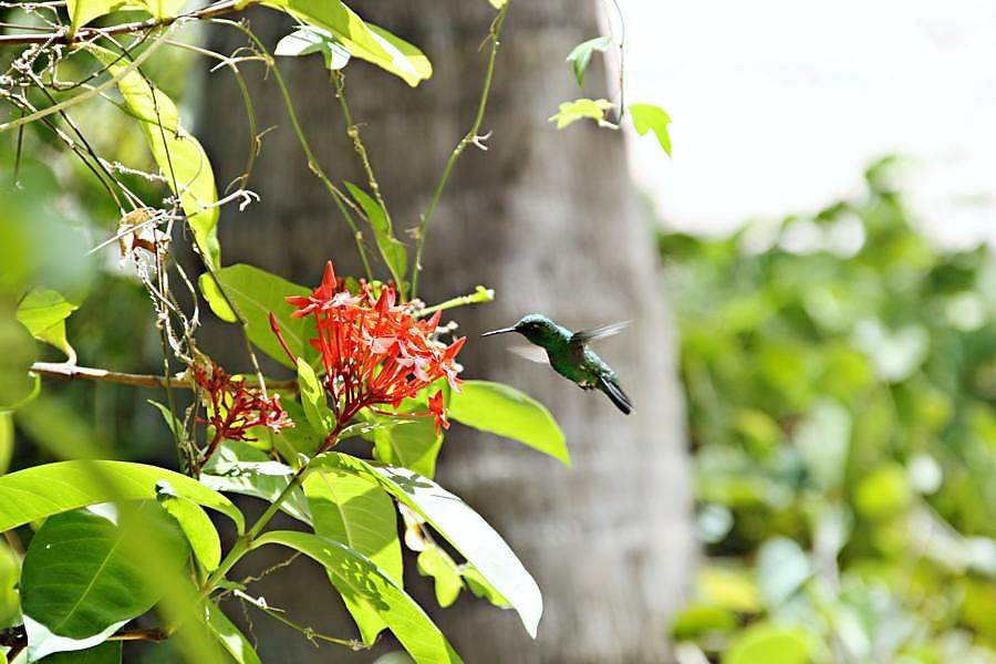 Tropischer Garten Don Genaro 4