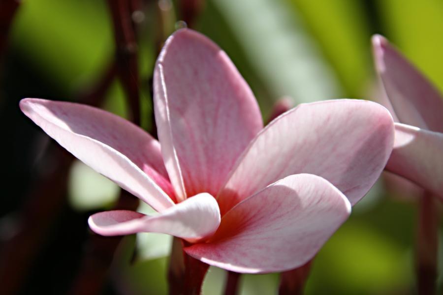 Tropischer Garten Don Genaro 9