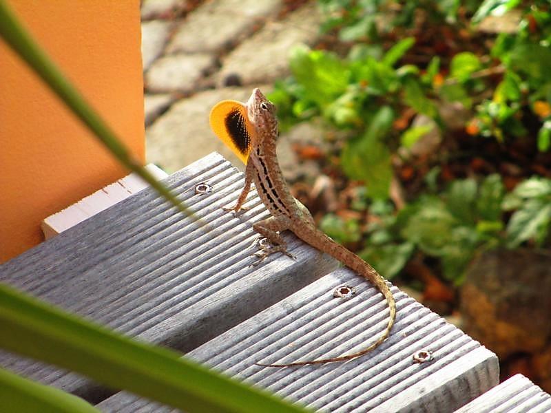 Tropischer Garten Don Genaro 16
