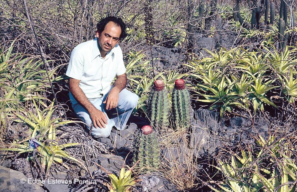 Encholirium viride, Minas Gerais 1979