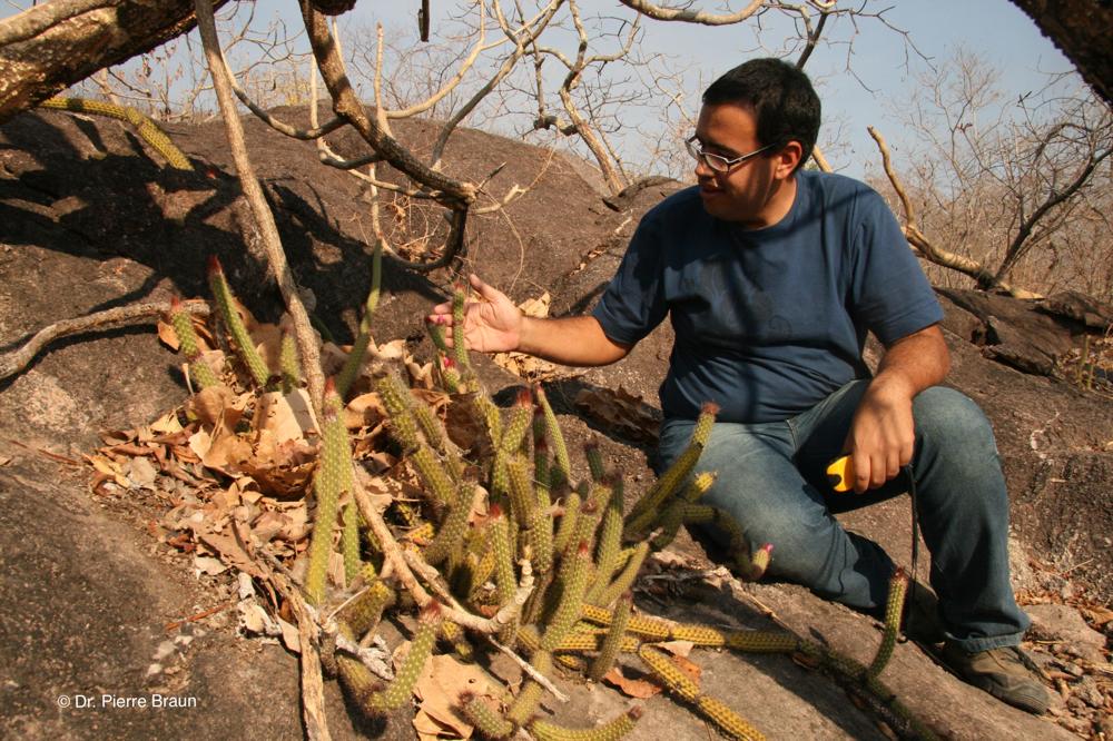 together with Marlon Machado at habitat of Arrojadoa in Goias