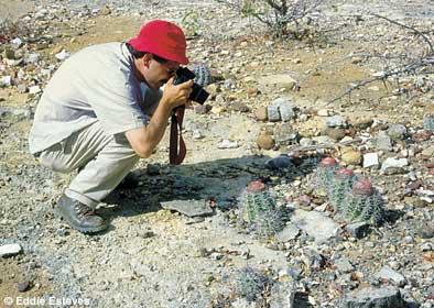 Melocactus pachyacanthus, Bahia 1993