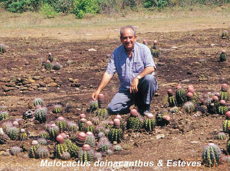 Chapada Grande, Melocactus deinacanthus, Bahia 1999