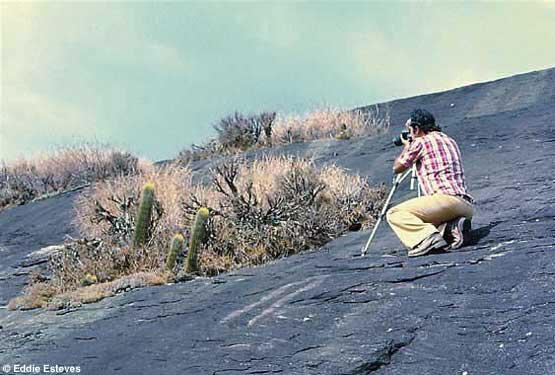 Coleocephalocereus estevesii, Minas Gerais 1977