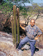 Coleocephalocereus goebelianus, Minas Gerais 1999