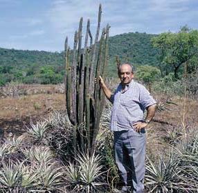 Facheiroa chaetacantha, Bahia 1999
