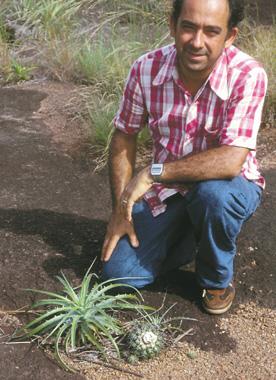 Discocactus in Mato Grosso, ca 1975