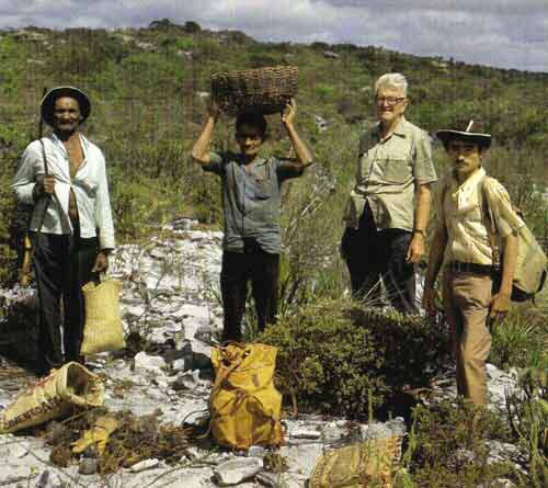 Albert Buining in habitat Discocactus araneispinus, Bahia. - Foto: Leopoldo Horst