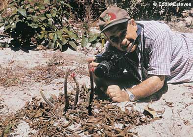 Arrojadoa rosenbergeriana, Minas Gerais 2002