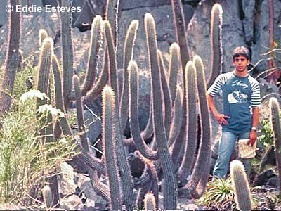 Dr. Charles Esteves Pereira, Bahia 1984