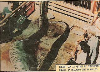 Sucuri, 12 m lang, einen Jungen verschlungen, Araguaia, 1986