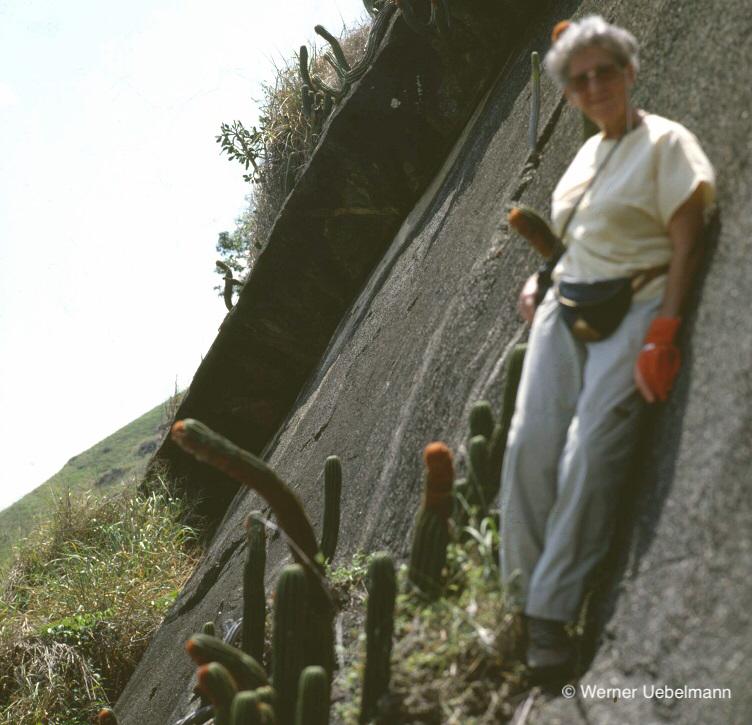 Rösly Uebelmann & Coleocephalocereus uebelmanniorum, Espirito Santo 1982