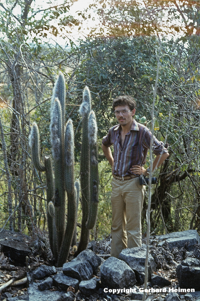 Pilosocereus braunii, Bahia 1979