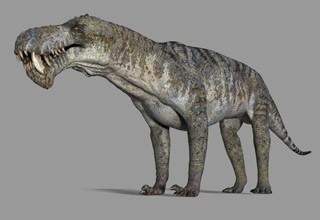 Gorgonopsia, prédateur des scutosaures