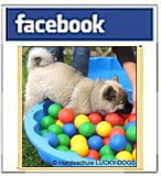LUCKY DOGS  -  Facebookseite
