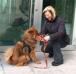 <<< Prüfung zum freiweilligen Wiener Hundeführschein bei Prüferin Andrea Eder / Hundeschule LUCKY DOGS (Pressebericht über die HFS Prüfung vom Bezirksjournal)