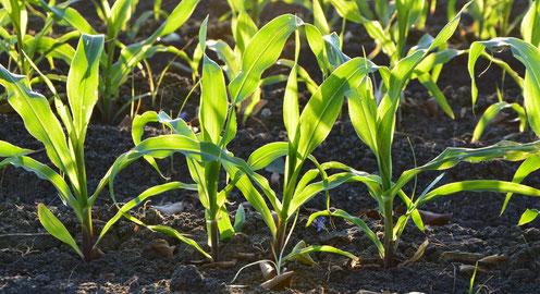 Sustratos adaptados a cultivos
