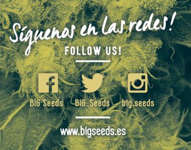 comprar semillas marihuana barcelona, semillas marihuana big seeds, banco semillas big seeds, banco semillas marihuana