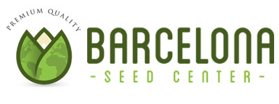 barcelona seed center semillas marihuana big seeds