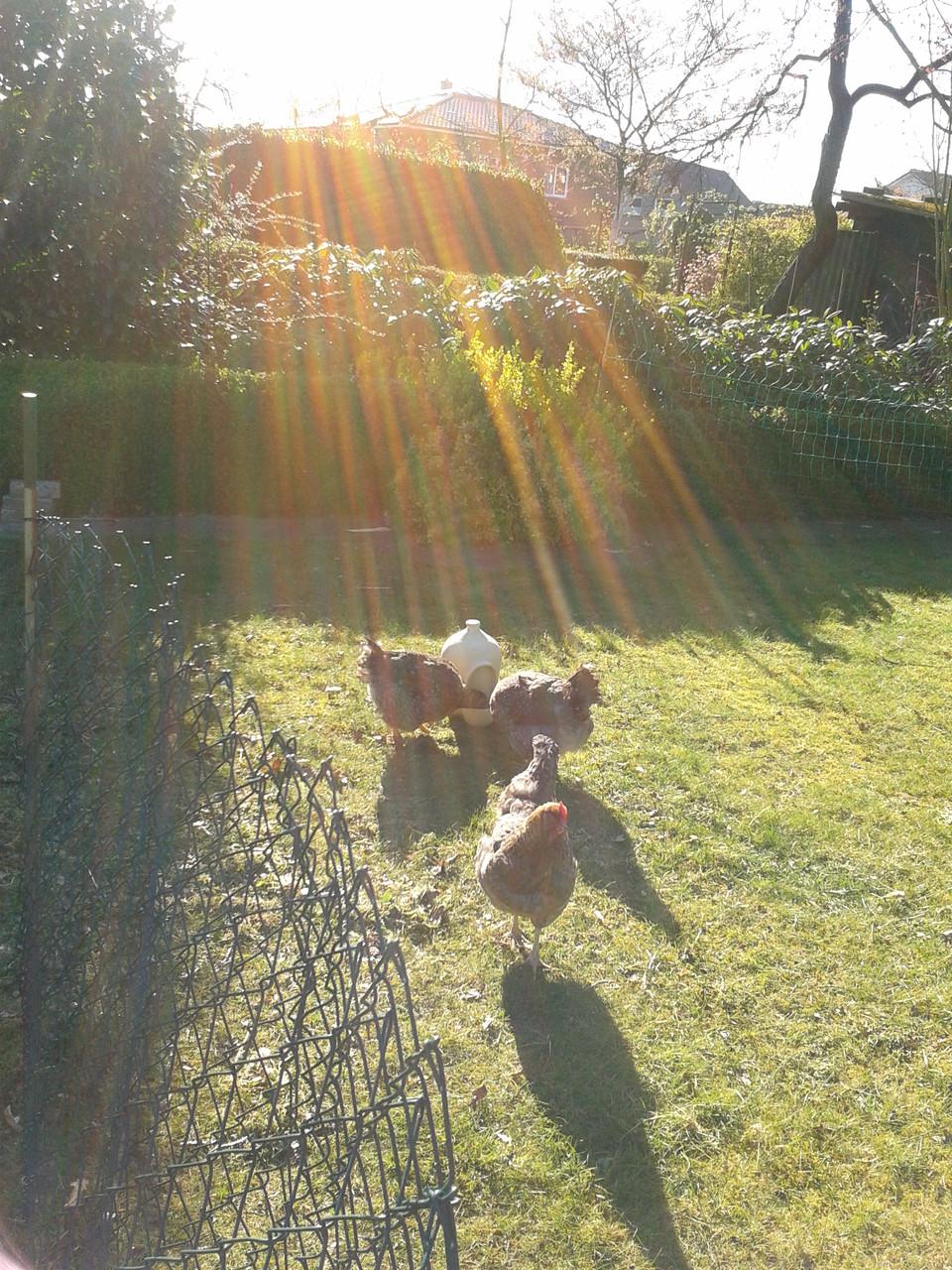 PetPot auf dem Hühnerhof