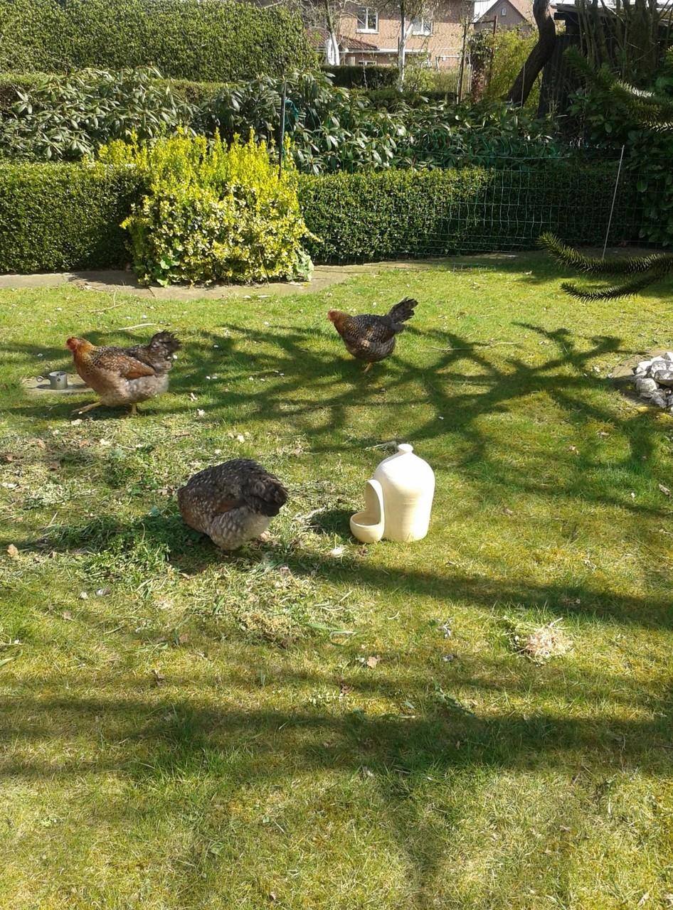 glückliche Hühner in 49757 Werlte