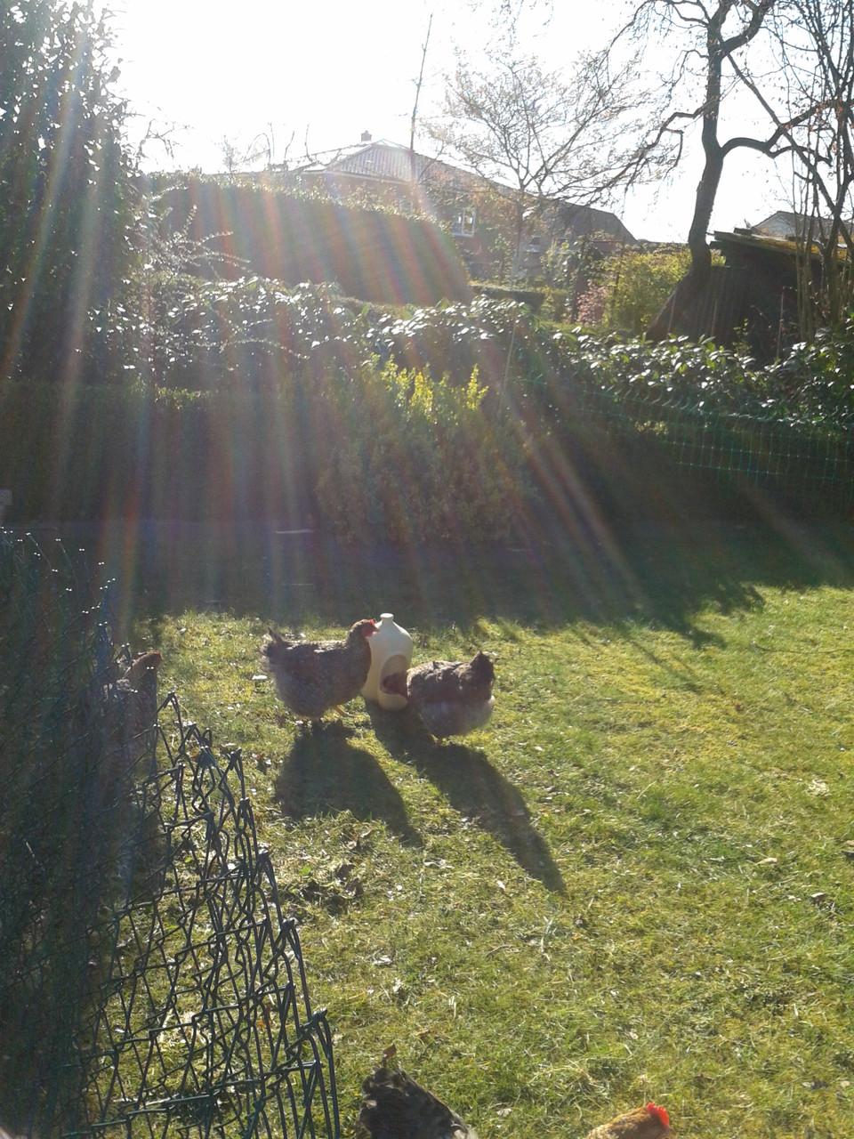 PetPot und die Hühner