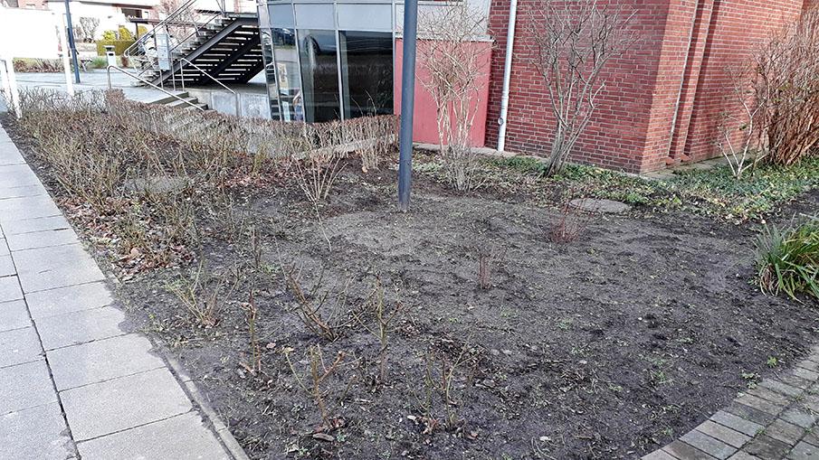 Warten auf den Frühling: Bepflanzte Fläche an der Auferstehungskirche in Fuhlsbüttel. Foto: Norbert Hinrichs
