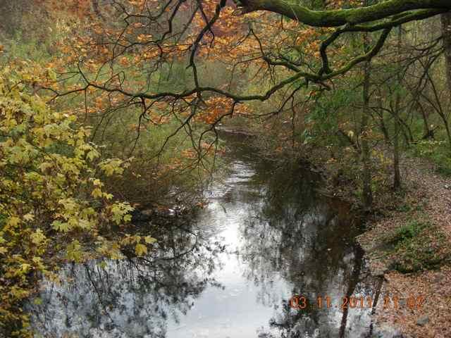 Beteiligungsstrecke: Dieser Blick von der Grevenaubrücke abwärts gehört zu den schönsten im Alstertal. Auch der Lebensraum Alster ist durch Ufergebüsch und erkennbar verwirbeltes Wasser (riffeliger, s.a. nächstes Bild) in relativ gutem Zustand.