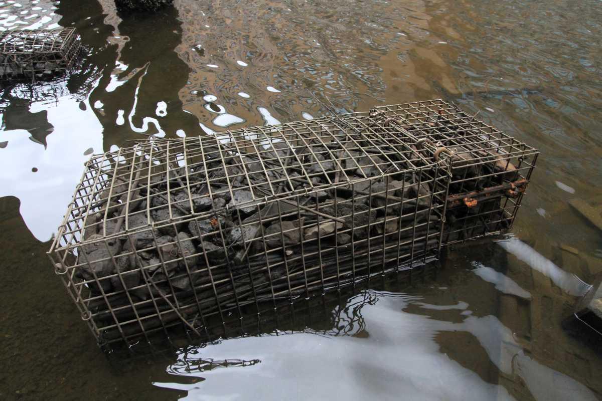 Ein Gabionenkorb, den wir im Jahr 2019 im Alsterfleet versenkt haben. Ein Monitoring soll zeigen, von welchen Arten diese Körbe besiedelt worden sind (Foto: A. Lampe).