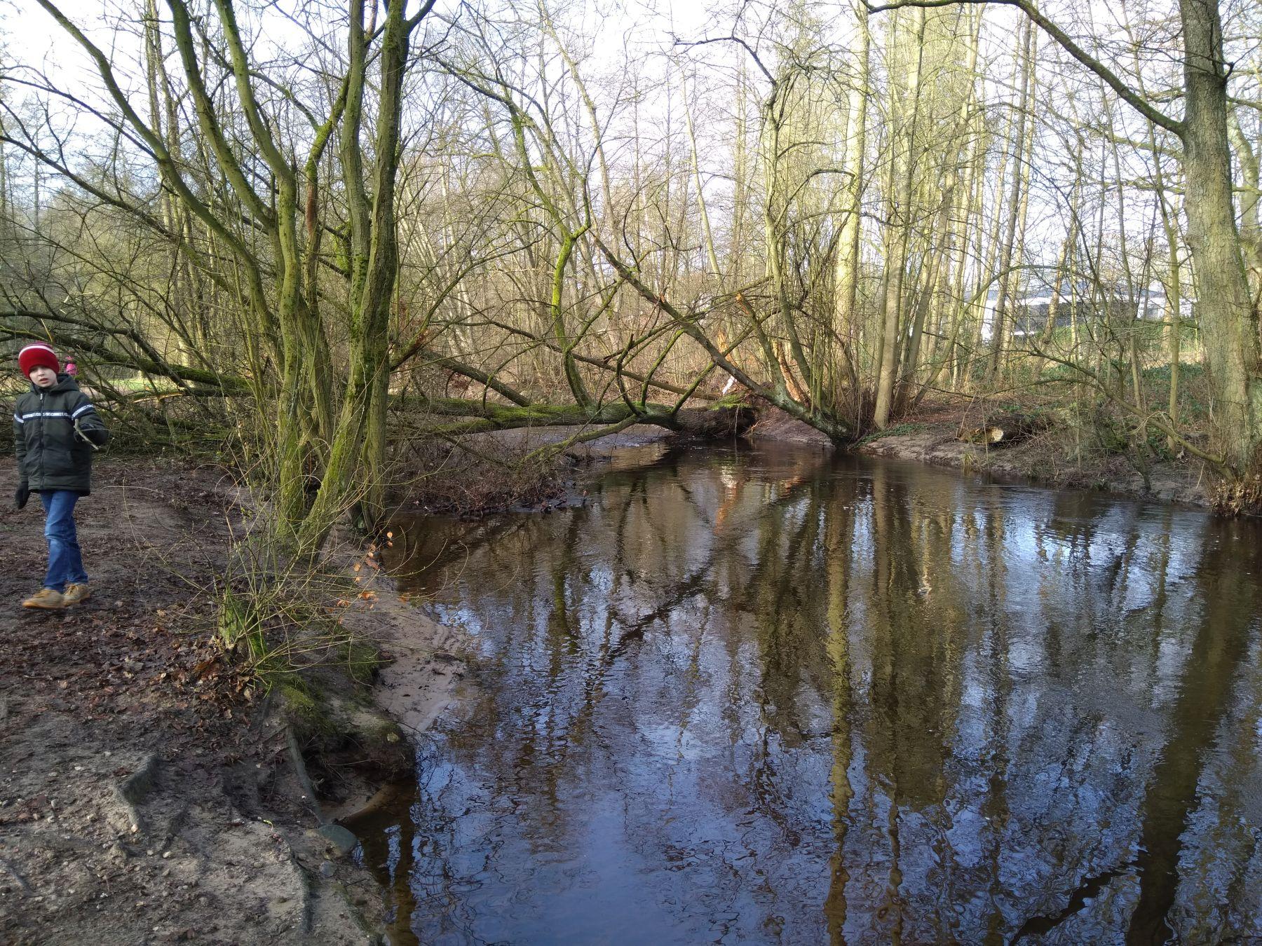 Blick auf denselben Baum von flussaufwärts (Foto: A. Lampe)