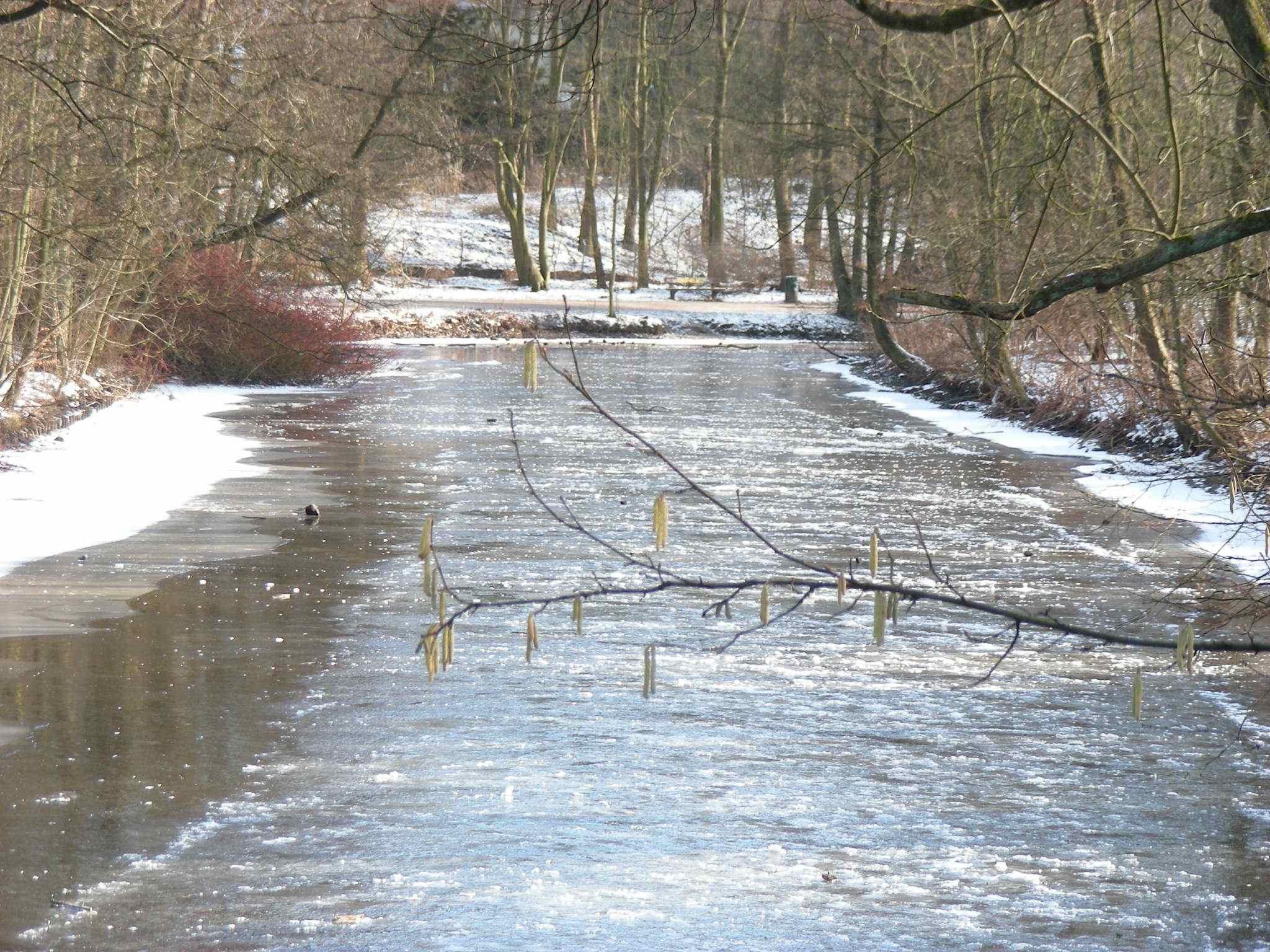 Eis am 06.02.2012 oberhalb Poppenbüttler Schleuse, wo der Stau weit in den Alsterlauf hinaufreicht.