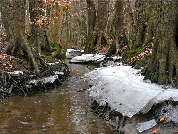 Die Bredenbek in Wohldorf ist einer der naturnahesten Bäche Hamburgs. Bilddatum 16.02.2012