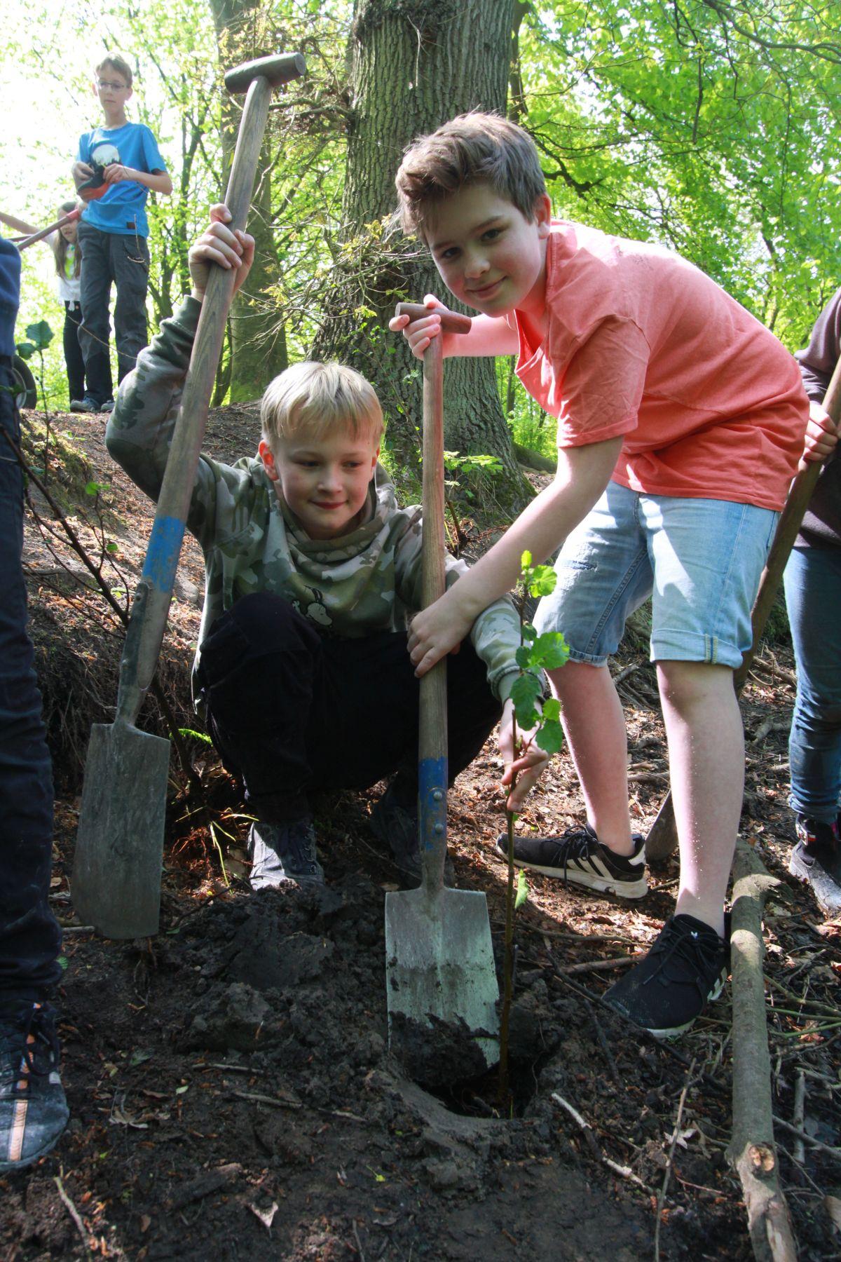Zum Abschluß haben die Schüler der ASS noch kleine Erlen an die Ufer gepflanzt. Wenn die kleinen Bäumchen größer sind, sollen sie mit ihren Wurzelen die Ufer stabilisieren (Foto: A. Lampe).