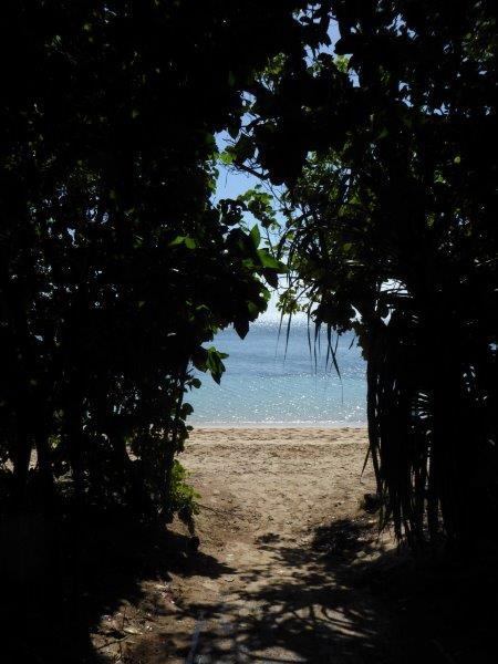Rain-forest meets beach
