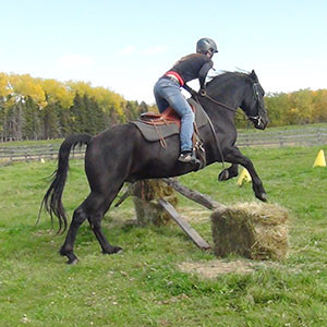 Canadian Hay Ranch,  horse jumping