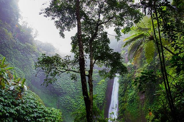 WWF-Studie: In einem Jahrzehnt wurden 43 Millionen Hektar Regenwald zerstört